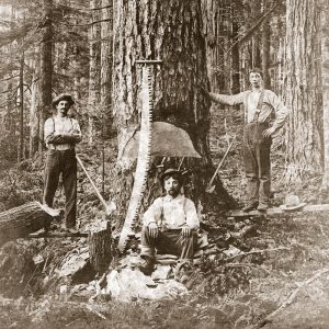 Preserving Forestry History